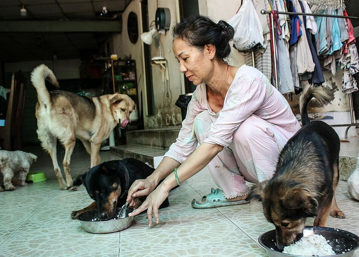 Bữa sáng, đàn chó sẽ được ăn hạt - thức ăn dành riêng cho chó. Bữa chiều ăn cơm nấu với thịt xay và rau củ trong vườn nhà. Ảnh: Diệp Phan.