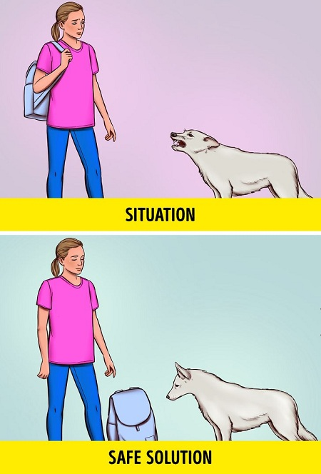 Đặt ba lô làm vạch ngăn cách giữa bạn và chú chó. Ảnh: Brightside.