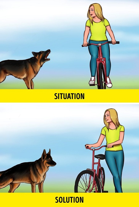 Thay vì đạp thật nhanh để thoát khỏi con chó dữ, bạn nên xuống xe dắt bộ. Ảnh: Brightside.