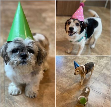 Những chú chó già được tổ chức sinh nhật trong khu chăm sóc chó Martys Place. Ảnh: Martys Place.
