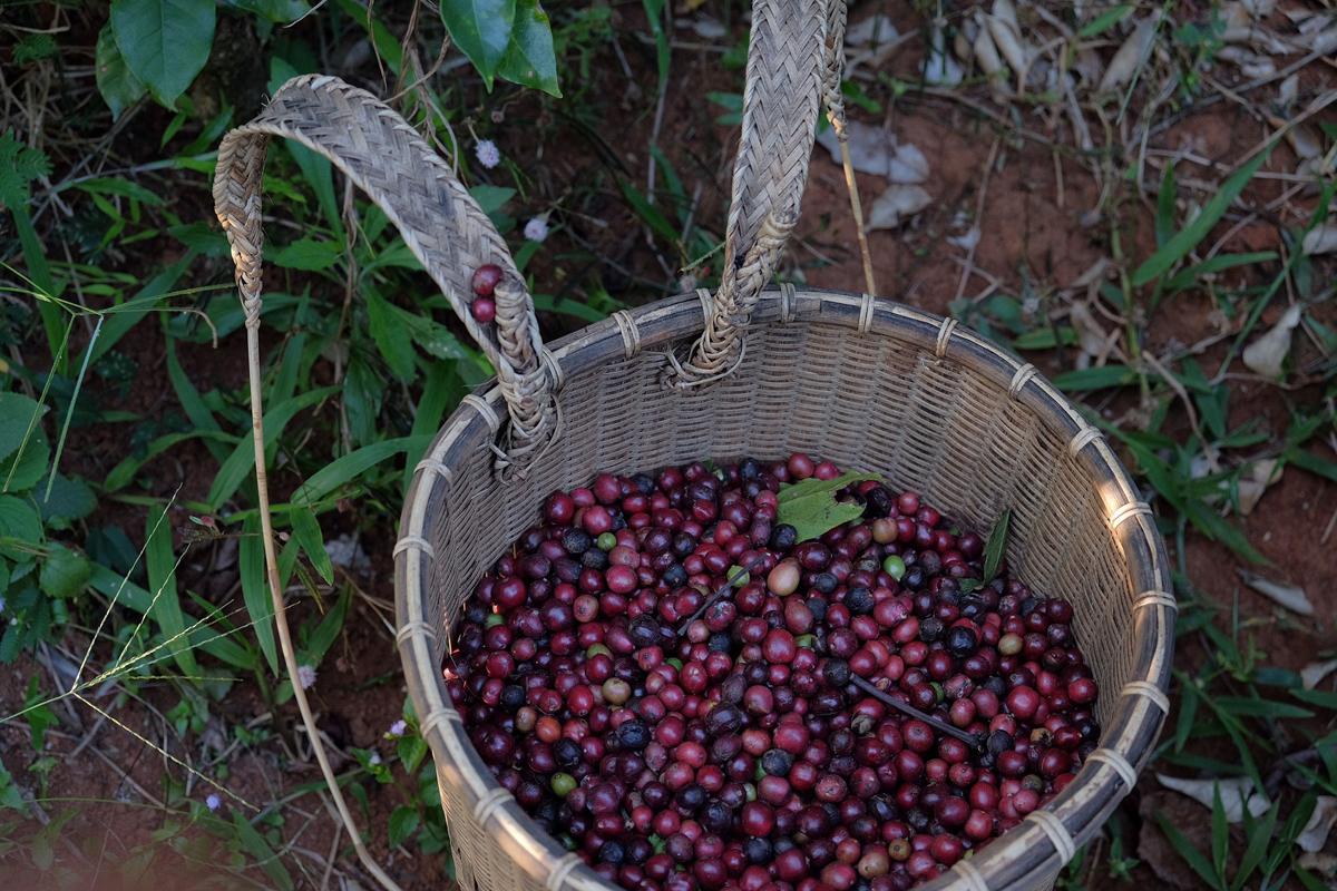 Làm nông nghiệp thường phải mất 5 năm mới cho thu hoạch. Hiện tại, nguồn thu chính của họ đến từ 2 hecta cà phê. Tuy nhiên do đang trong giai đoạn đầu cần phải đầu tư nhiều nên đôi trẻ không tránh được những khó khăn về tài chính.