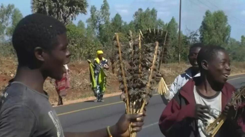 Những người bán chuột chào hàng mời mua những thanh thịt chuột đã được nướng chín tại Malawi. Ảnh: AFP.