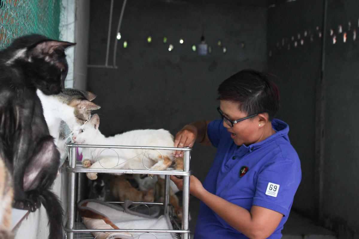 Những chú chó, mèo bị liệt 4 chân, chị Ngọc đặt nằm trên kệ, lót khăn để thấm nước tiểu. Ảnh: Diệp Phan.