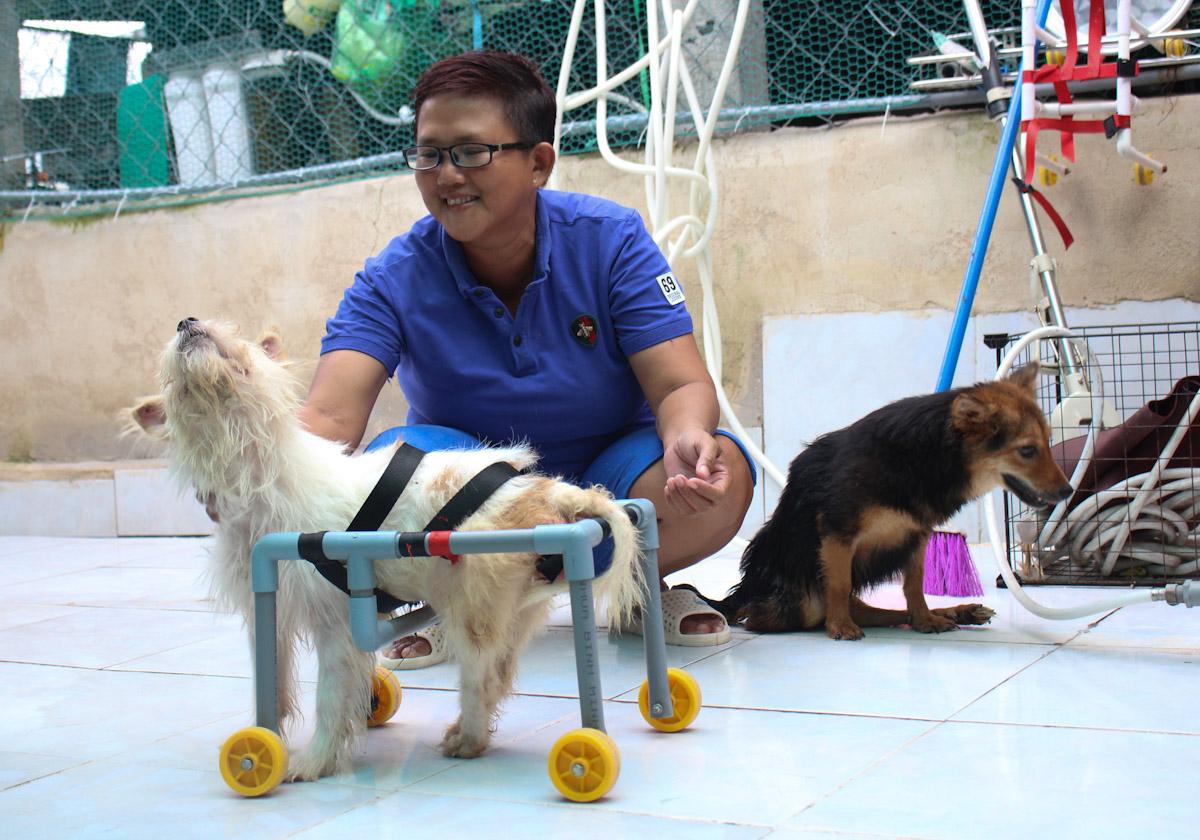 Chị Ngọc đang nuôi gần 50 con chó, mèo đa số bị liệt. Ảnh: Diệp Phan.