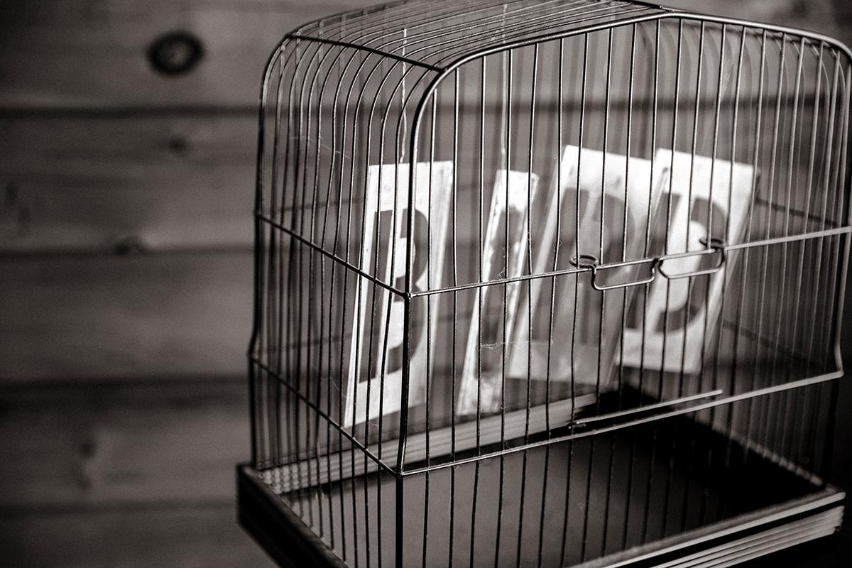 Hiệu ứng lồng chim được những người thông minh ứng dụng rất hiệu quả vào cuộc sống. Ảnh minh họa: Medium.