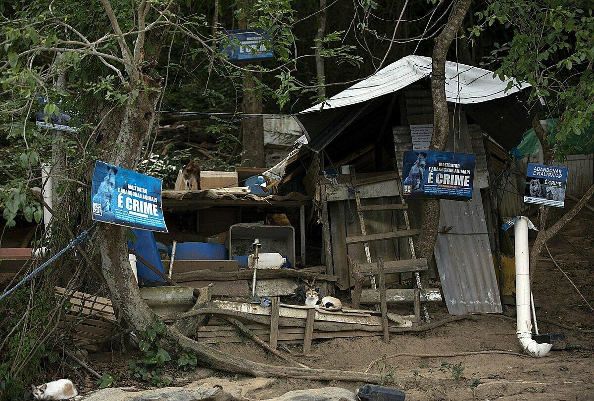 Một khu nhà ở cho mèo trên đảo do các tình nguyện viên của tổ chức Người bảo vệ trái tim động vật dựng trên đảo Furtada. Chính quyền cũng treo nhiều tấm biển cảnh báo bỏ rơi, ngược đãi động vật là tội phạm. Ảnh: AP/Silvia Izquierdo