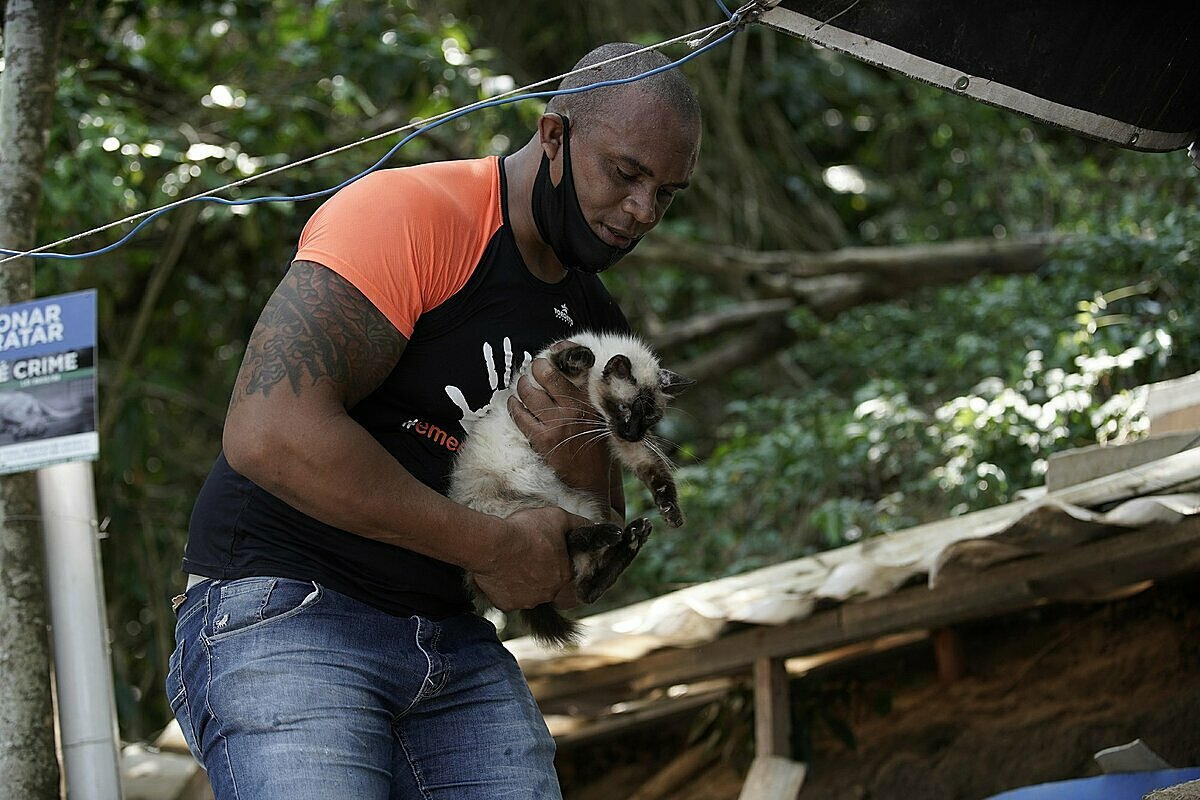 Một tình nguyện viên đang bế chú mèo bị thương do chủ cũ bỏ rơi trên đảo. Ảnh: AP/Silvia Izquierdo.