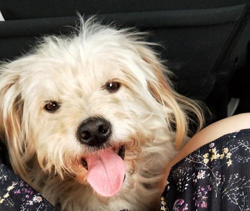 Vốn rất yêu quý chú chó nên người nhà anh Qiu bổ đi tìm nó khắp nơi. Ảnh: Qianjiang Evening News.