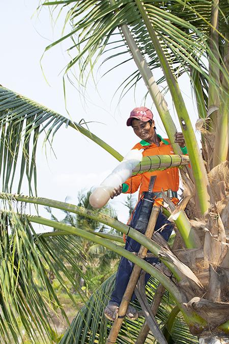Công nhân của xưởng của Thạch Thị Chal Thi thu hoạch mật hoa dừa. Ảnh: Nhân vật cung cấp.