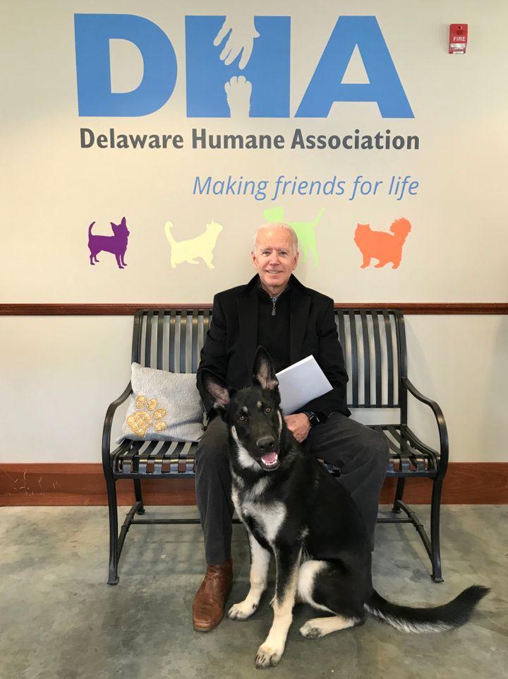 Joe Biden chụp ảnh với Major. Ảnh: Delaware Humane Assocation.