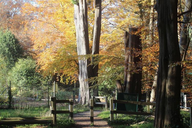 Quang cảnh dưới 3 cây sồi có tuổi thọ từ 150- 170 năm vào mùa xuân trong vườn nhà chị Hương. Ảnh: Nhân vật cung cấp.