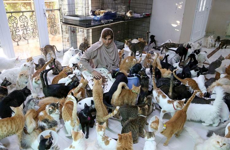 Những chú mèo bị bỏ rơi được Maryam nuôi dưỡng, chăm sóc. Ảnh: AFP/Mohammed Mahjou.