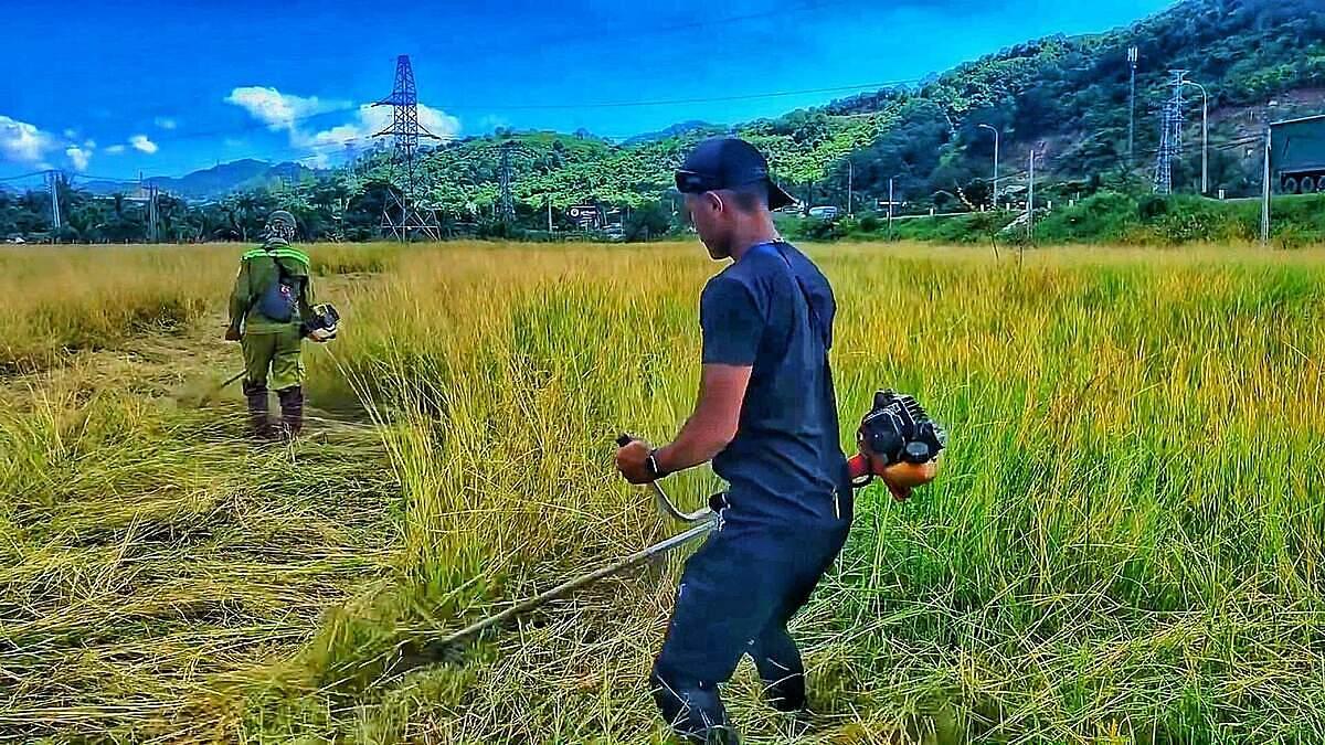 Chàng trai phụ giúp nông dân phát hoang cắt cỏ để trồng lúa trên chuyến xuyên Việt. Ảnh: Nhân vật cung cấp.