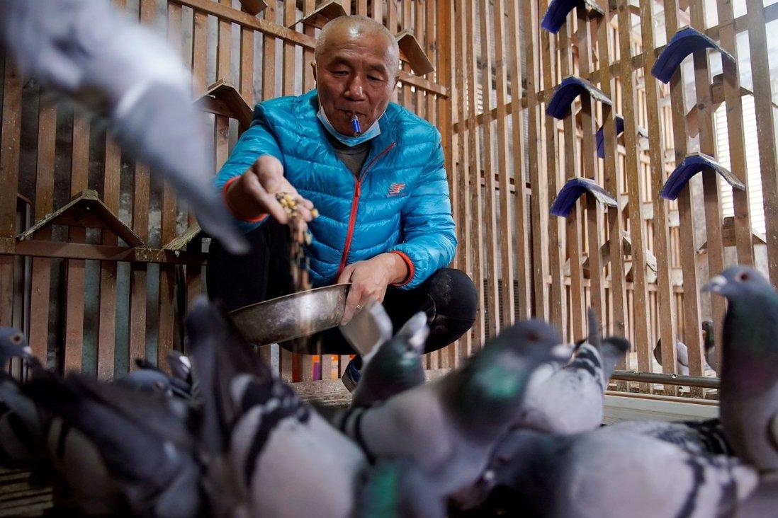 Ông Yu Yuguang đam mê với thú chơi chim bồ câu đua. Ảnh: SCMP.