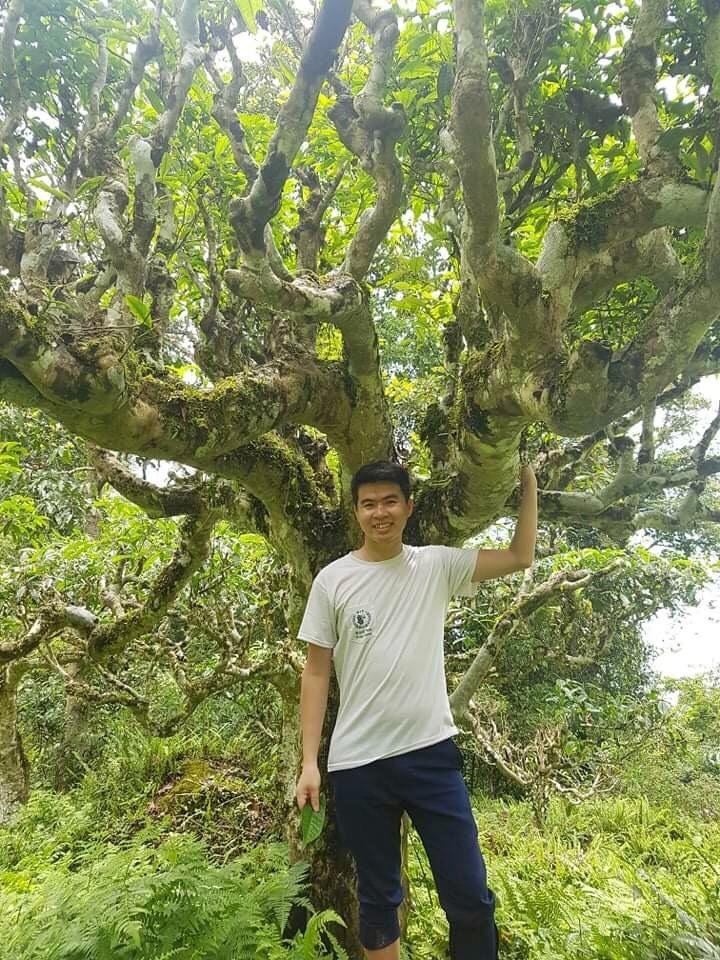Phạm Văn Trường 27 tuổi, đang trong hành trình khởi nghiệp lần 3 với cây chè Shan tuyết. Ảnh: Nhân vật cung cấp.