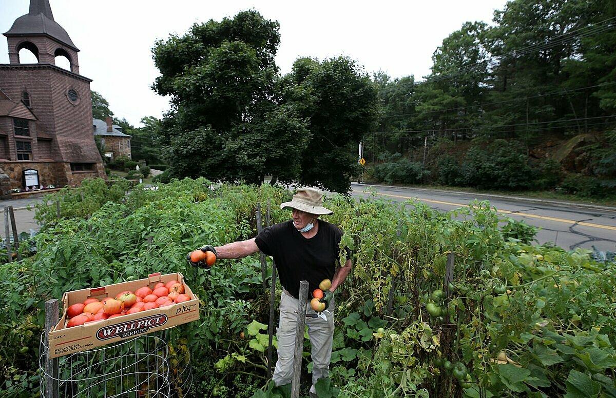 Người đàn ông nuôi nghìn người từ rau trồng trên dải phân cách - 2