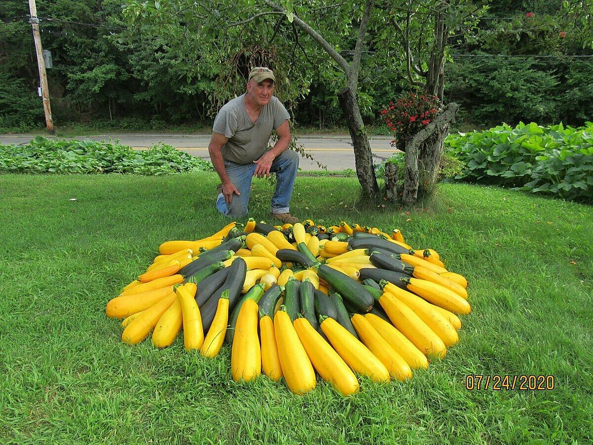 Người đàn ông nuôi nghìn người từ rau trồng trên dải phân cách