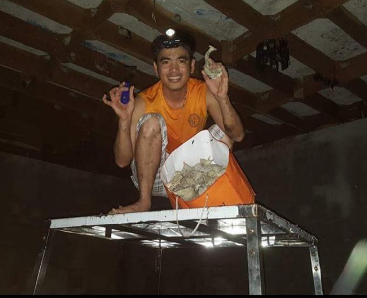 Anh Trần Tuấn Anh khai thác yến tại căn nhà yến đầu tiên của gia đình. Ảnh: Nhân vật cung cấp.