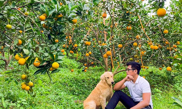 Dưới tán cam trong vườn gia đình Khuê, cỏ dại mọc um tùm, đạt đủ khối lượng sẽ được cắt tỉa để tạo mùn và giữ ẩm cho đất. Ảnh: Nhân vật cung cấp.
