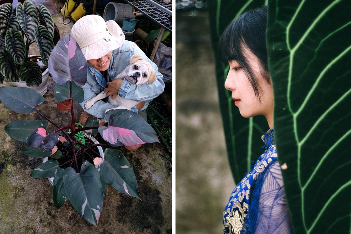 Quý với cây công chúa hồng được trả gấp nhiều lần giá trị thực (trái) và cây mặt nạ Pharaoh lớn nhất Việt Nam với lá dài 1,2 mét. Ảnh: Nhân vật cung cấp.