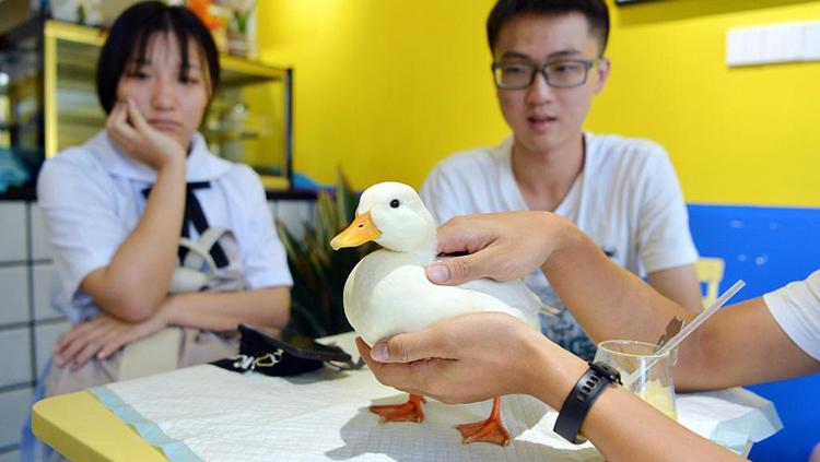 Một cặp đôi chơi với chú vịt gọi tại một câu lạc bộ ở Thượng Hải. Ảnh: sina.
