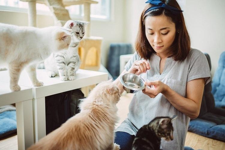 Nhu cầu tìm kiếm thú cưng mất tích tăng cao do thị trường thú cưng phát triển đột biến ở Trung Quốc. Ảnh: SCMP.