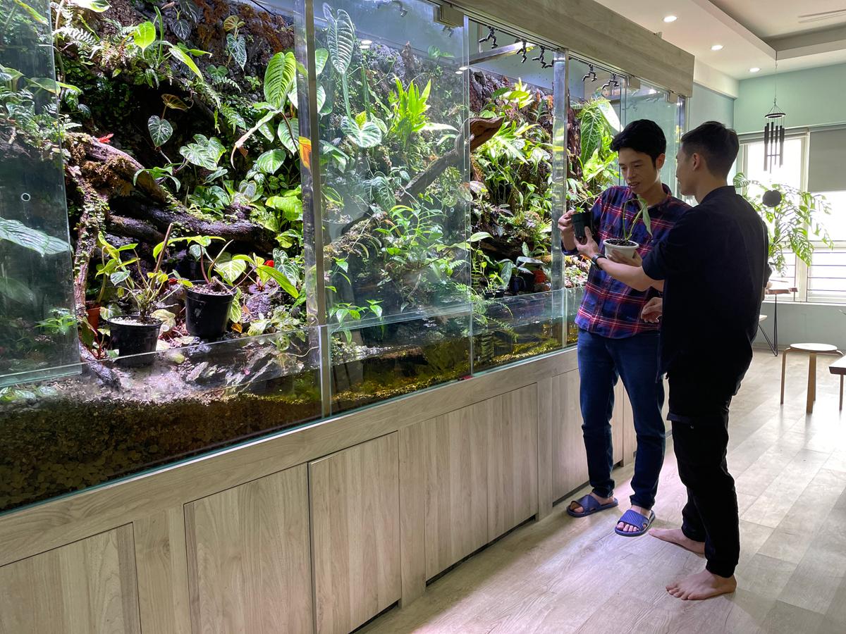 Đây là bể bán cạn để trưng kiểng lá mà anh Lợi (áo sọc) dành 4 tháng để làm. Bể dài 4,5 mét, chứa cả trăm loại kiểng lá được anh sưu tầm 3 năm qua. Ảnh: Phan Dương.