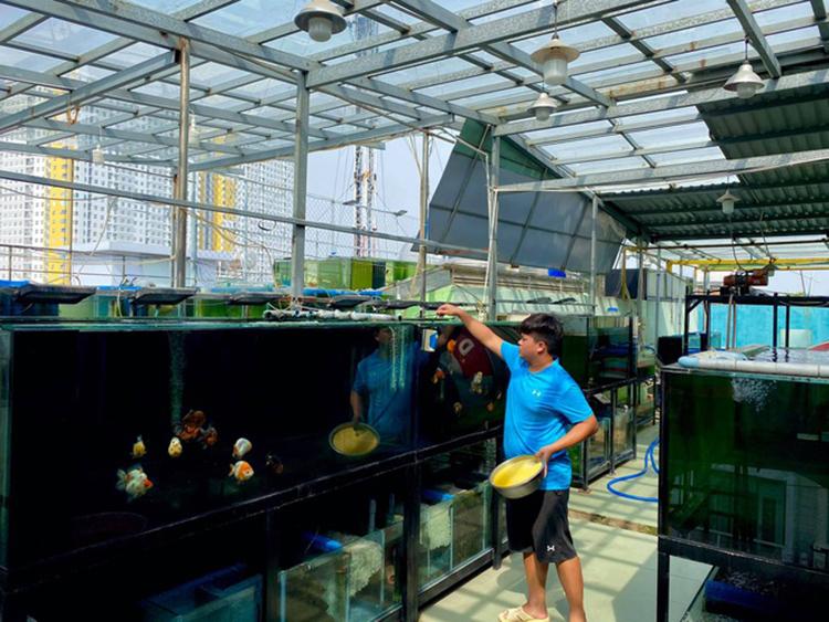 Hệ thống 20 hồ cá trên sân thượng 200m2 của Nguyễn Hữu Thắng. Ảnh: Nhân vật cung cấp.
