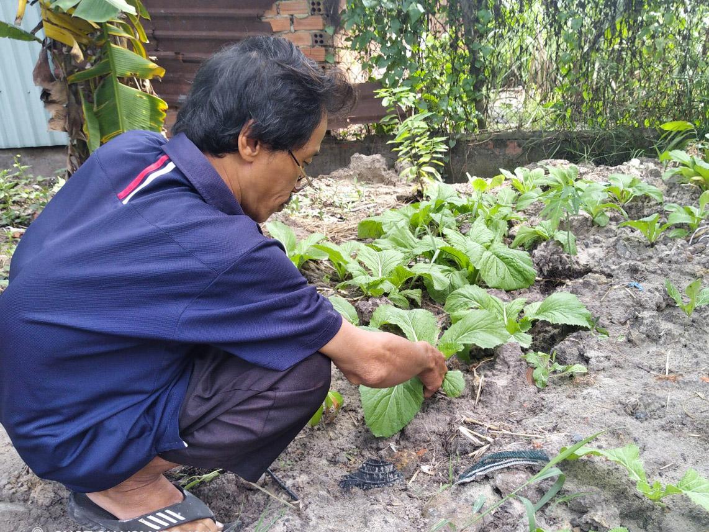 Những bữa ăn của vợ chồng anh Phi suốt một tháng nay chỉ là rau hái được trên bãi đất hoang cạnh nhà trọ. Ảnh: Nhân vật cung cấp.