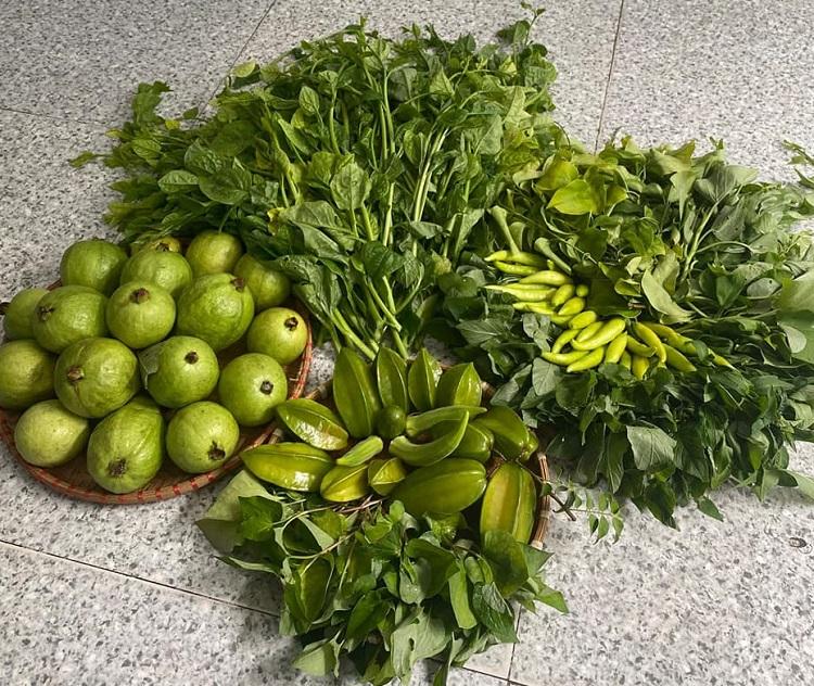 Một buổi thu hoạch của chị Trang được vài ký ổi, khế, vài quả cóc, rau xanh...Ngoài tặng hàng xóm, bạn bè, vài khách gạ mua ổi, chị vẫn có hàng bán. Tôi vừa bán vừa cho. Bán ký ổi thì cho thêm ít rau nữa, bà chủ vườn hào sảng. Ảnh: Quỳnh Trang.