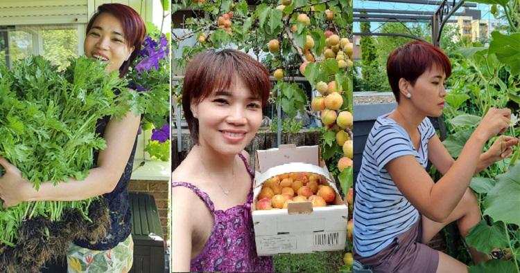 Chị Vân thu hoạch trái cây, rau quả tự trồng và thụ phấn cho bầu bí trong vườn ở ban công. Tìm niềm vui đơn giản tại nhà giúp vợ chồng Tuyết Vân quên đi căng thẳng vì dịch bệnh. Ảnh: Nhân vật cung cấp.