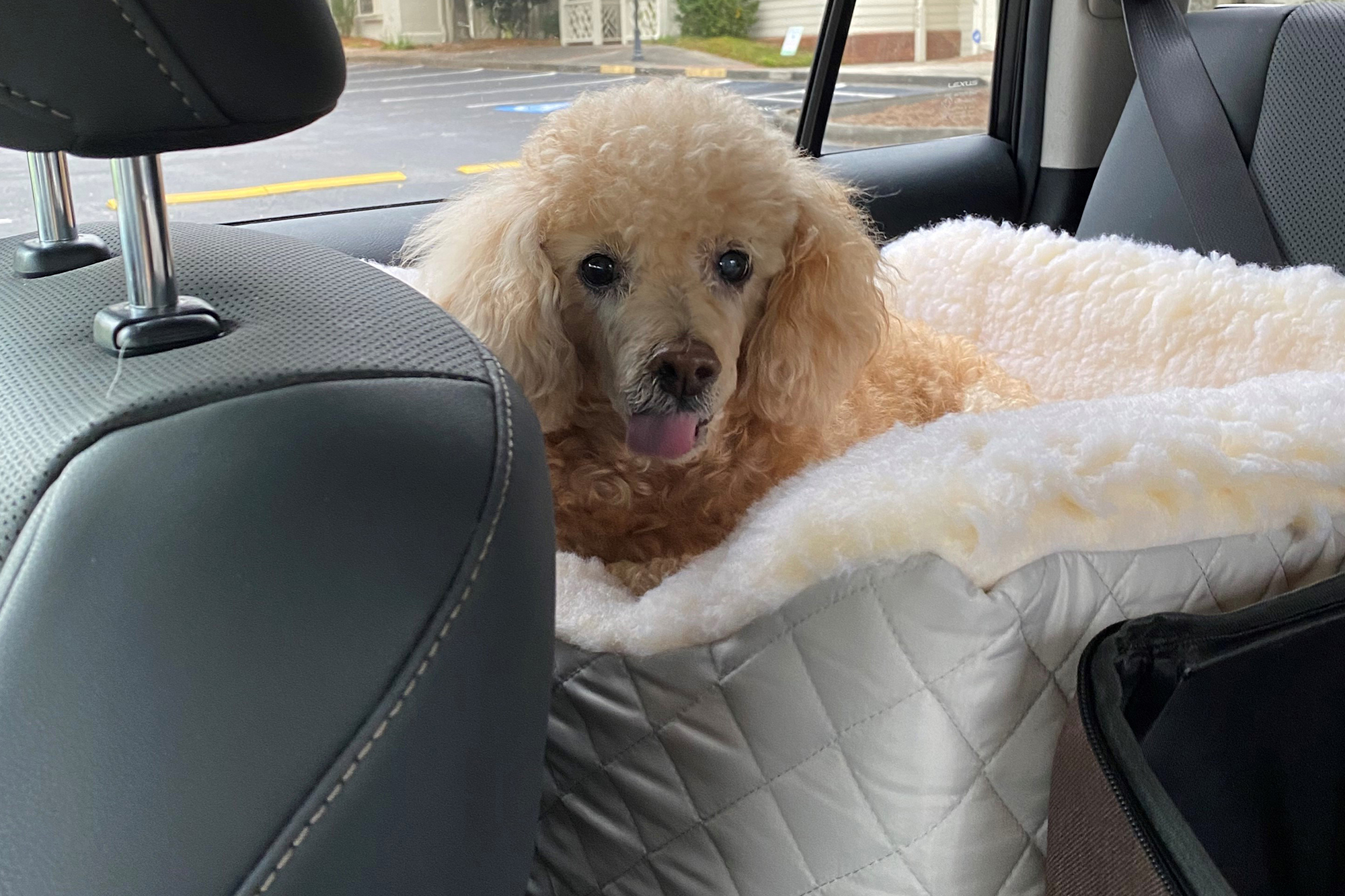 Timmy was passed away in his owner's car.  Photo: AP
